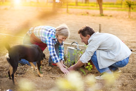 wife and husband: Senior couple planting seedlings in their garden