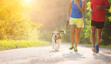 Active seniors running with their dog outside in green nature Stock Photo - 44436086
