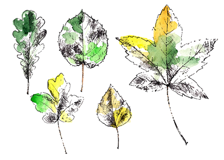 beech: Colorful hand drawn autumn leaves. Vector illustration.