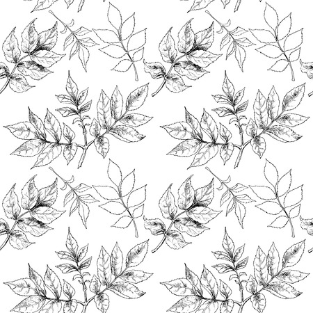 black and white: Black and white hand drawn autumn leaves. Vector illustration.