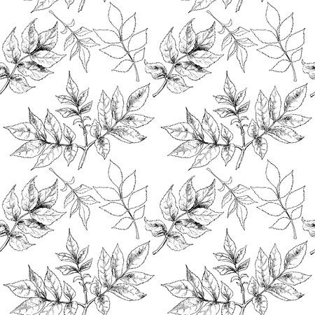 blanco negro: Mano blanco y negro dibujado hojas de otoño. Ilustración del vector.