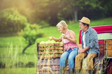 crop harvest: Senior couple sitting in a truck after harvesting apples Stock Photo