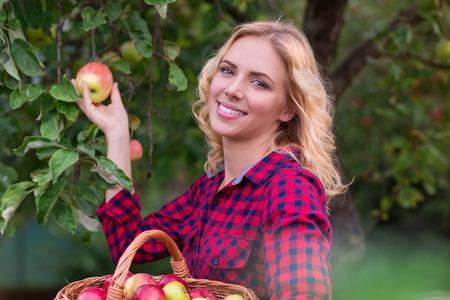 albero da frutto: Bella giovane donna in camicia rossa raccolta delle mele