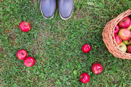 rubber boots: Unrecognizable young woman in rubber boots with basket full of apples