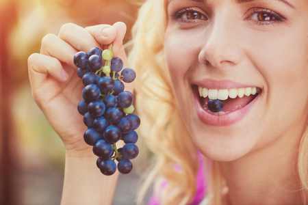 people eating: Beautiful young  blond woman harvesting blue grapes Stock Photo
