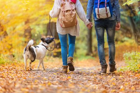 dog days: Hermosa joven pareja en una caminata en el bosque de otoño
