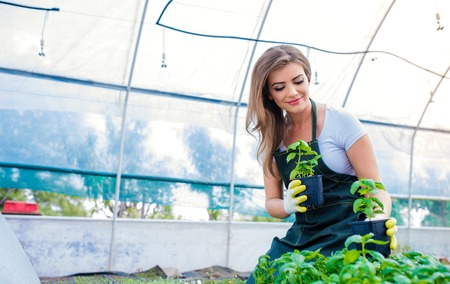 green herbs: Beautiful young woman gardening with seedlings in greenhouse Stock Photo