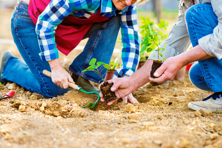 back hoe: Close up of unrecognizable senior couple holding little seedling ready to plant