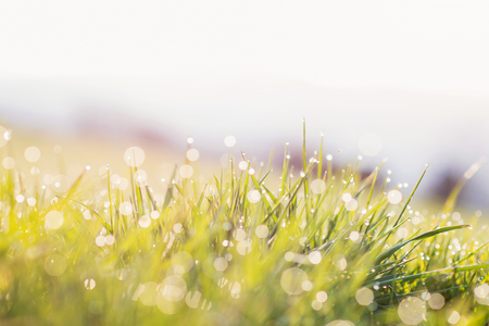 morning dew: Close up of morning dew drops on blades of green grass during sunrise Stock Photo