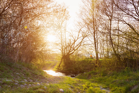 bourne: Rural landscape with bourn and blooming trees, sunny spring nature Stock Photo