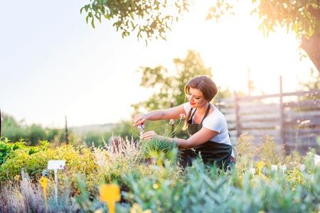 Jeune jardinier coupe petite plante à fleurs, nature verte ensoleillé, printemps jardin Banque d'images