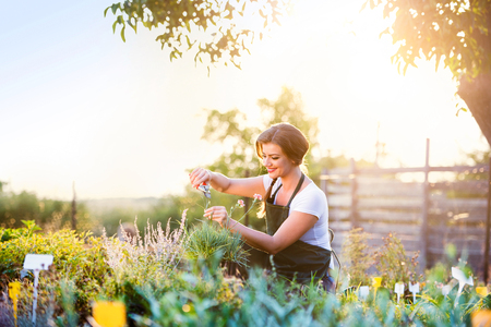 herb garden: Young gardener cutting little flower plant, green sunny nature, spring garden Stock Photo