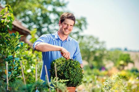 Handsome gardener pruning little boxwood bush against green sunny nature Reklamní fotografie