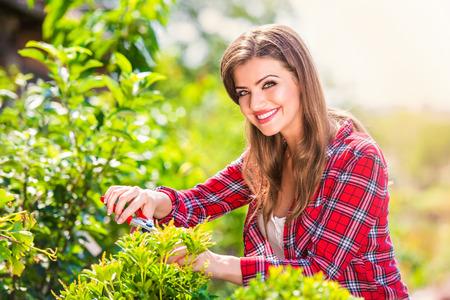 scissor: Beautiful gardener pruning little tree against green sunny nature