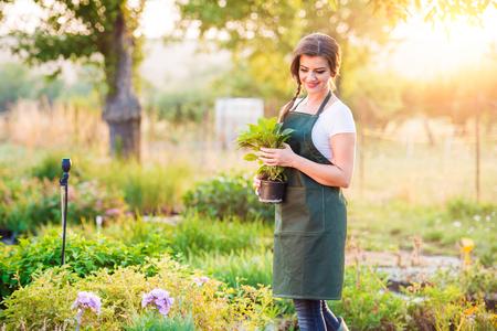 Gardener holding a seedling in flower pot, green sunny nature, sunset