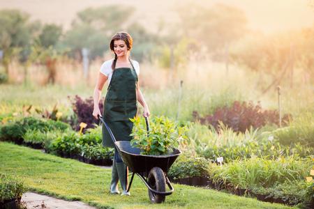手押し車、日当たりの良い夏の自然、日没で苗木を運ぶ緑のエプロンの庭師