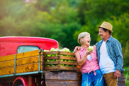 autumn food: Senior couple harvesting fruit, standing at red vintage pickup truck, woman holding apple Stock Photo