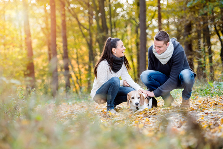 women in jeans: Beautiful young couple walking a dog in colorful sunny autumn forest, crouching Stock Photo