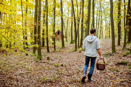 white back: Young man with basket picking mushrooms in autumn forest, rear view