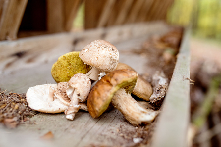 outdoor pursuit: Close up of various mushrooms laid on old wooden bench in autumn forest Stock Photo