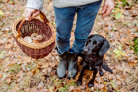 Unrecognizable man with his black dog holding wicker basket with mushrooms in autumn forest