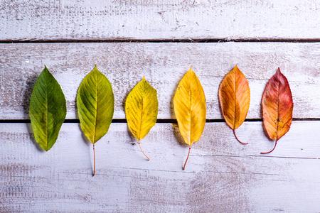 Herfstsamenstelling. Diverse kleurrijke bladeren op een rij. Studio opname op witte houten achtergrond. Kopieer de ruimte. Stockfoto