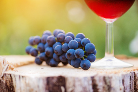 wine grape: Glass of red wine and bunch of blue grapes laid on wooden stump