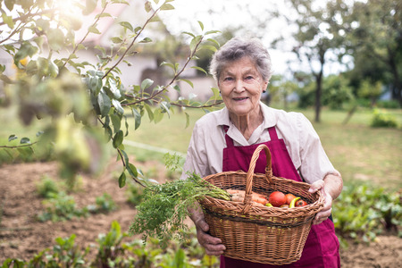 Senior woman in her garden harvesting green peppers, tomatoes and carrots. Summer garden. Imagens