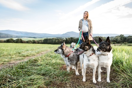 walk in: Beautiful young pregnant woman on a walk with three dogs in green sunny nature