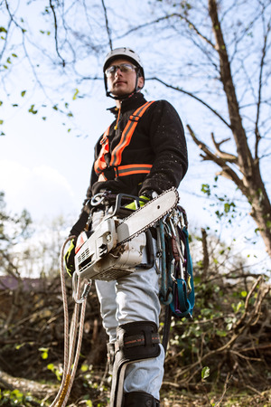 sawyer: Lumberjack with chainsaw and harness going to prune a tree.