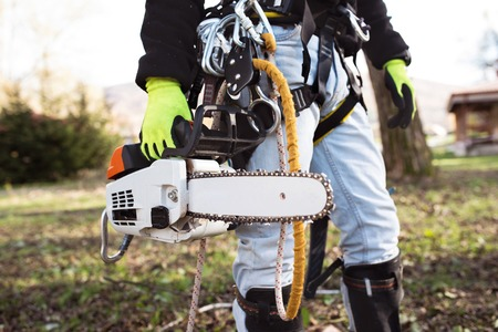 sawyer: Lumberjack with harness and chain saw prepared to prune a tree. Stock Photo