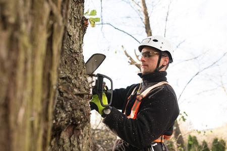 チェーンソーと木を剪定ハーネス木こり。