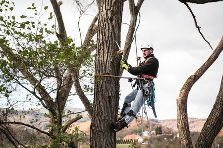 Houthakker met zaag en harnas snoeien van een boom. Stockfoto