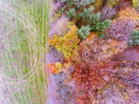 Aerial view of colorful autumn forest. Stock Photo