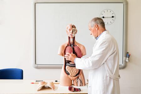 Senior teacher teaching biology with human anatomy model.