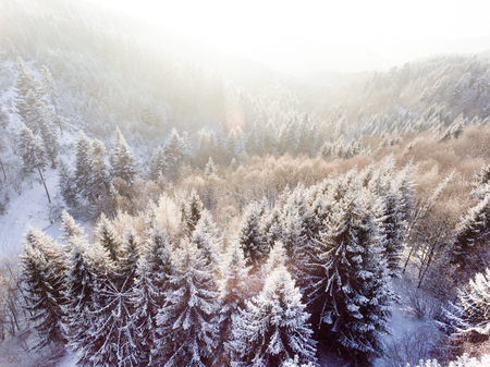 Aerial view of coniferous forest in winter. Stock fotó