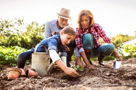 Starszy para z wnuczka ogrodnictwo w ogrodzie przydomowym