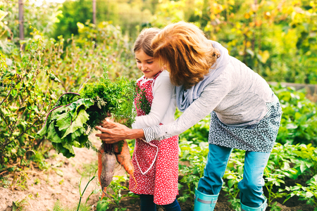 Senior woman with grandaughter gardening in the backyard garden. Stock Photo - 88121627