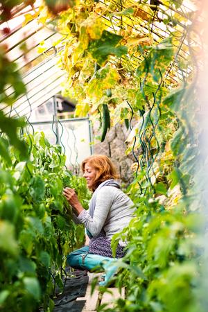 Senior woman gardening in the backyard garden.