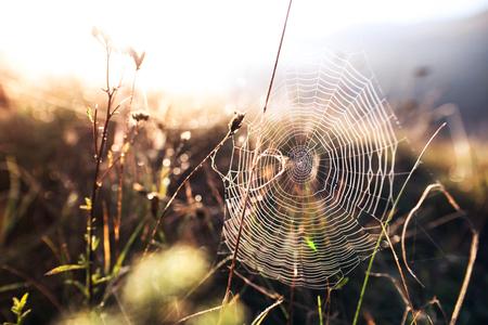 Sluit omhoog mening van een spinneweb.