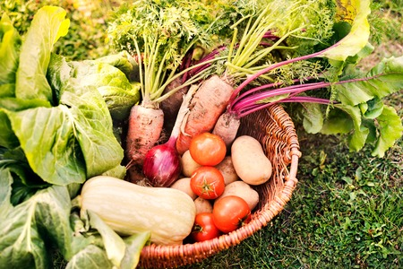 Korb voll des Gemüses im Hinterhofgarten. Standard-Bild - 89727945