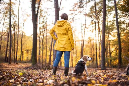 Ältere Frau mit Hund auf einem Weg in einem Herbstwald.