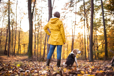 Starsza kobieta z psem na spacerze w jesień lesie.
