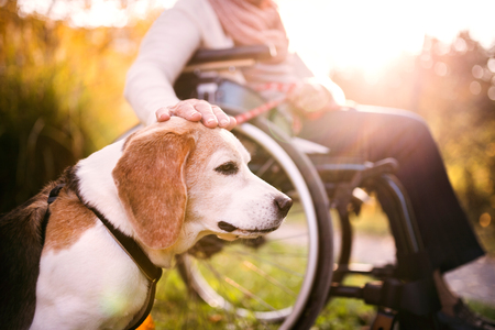 An elderly woman in wheelchair with dog in autumn nature. Фото со стока