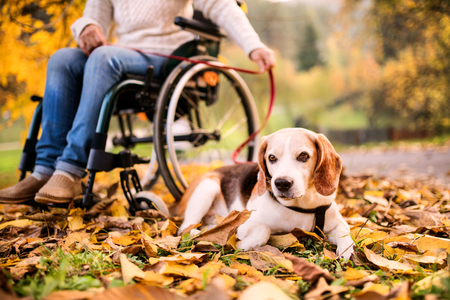 A senior woman in wheelchair with dog in autumn nature.