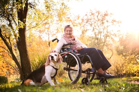Una anciana en silla de ruedas con perro en la naturaleza de otoño.
