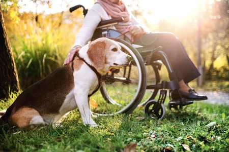 An elderly woman in wheelchair with dog in autumn nature. Stock Photo