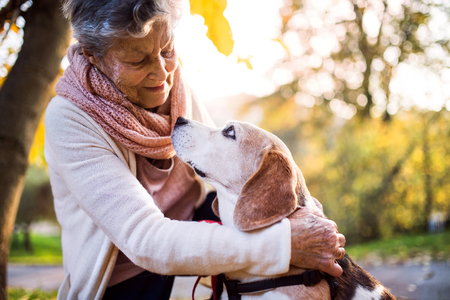 An elderly woman with dog in autumn nature. Standard-Bild