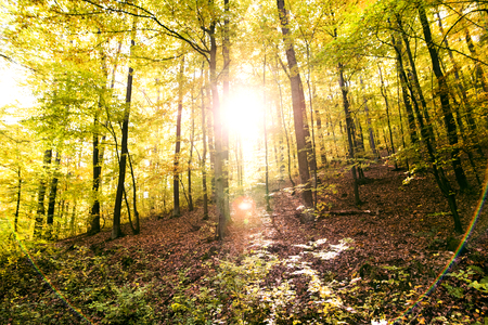 Autumn forest in an early morning. Stok Fotoğraf