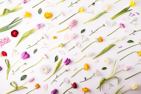 Flowers on a white background. Stock Photo